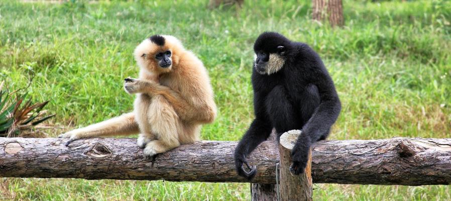monkeys-talking-web-content