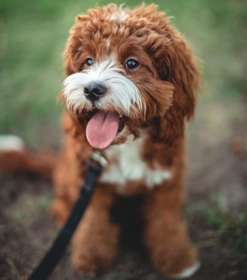 Puppy Photo by Roberto Nickson on Unsplash